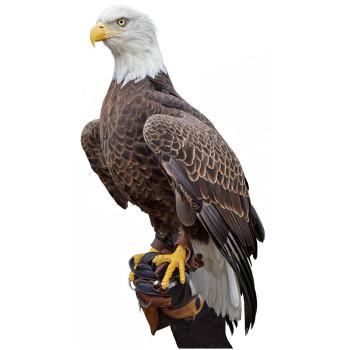 American Bald Eagle Cardboard Cutout