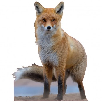 Red Fox Cardboard Cutout - $44.95