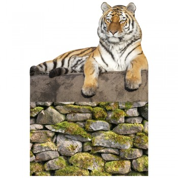 Tiger on Pedestal Cardboard Cutout - $49.95