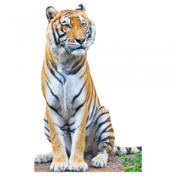 Tiger Sitting Cardboard Cutout - $49.95
