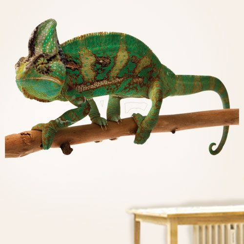Reptile Wall Decals