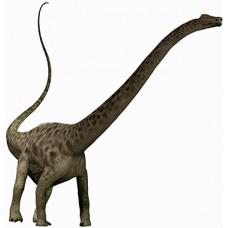 Diplodocus Dinosaur Cardboard Cutout