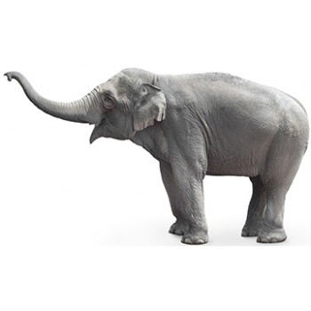 Asian Elephant Cardboard Cutout - $59.99