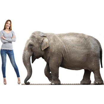 Elephant On Rope Cardboard Cutout