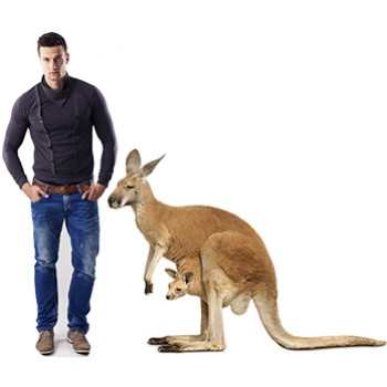 Kangaroo and Joey Cardboard Cutout
