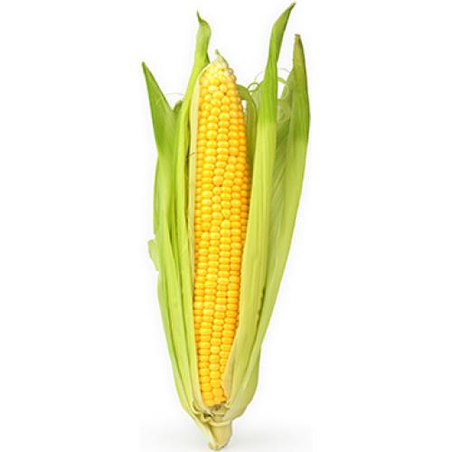 Corn Cardboard Cutout
