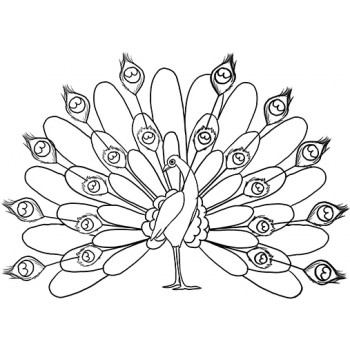 Peacock Cardboard Coloring Cutout - $24.99