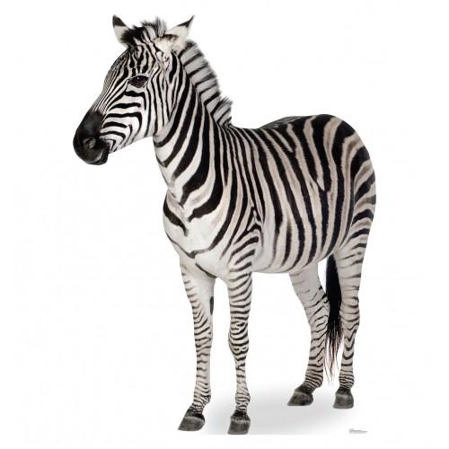 Zebra Prop Cardboard Cutout