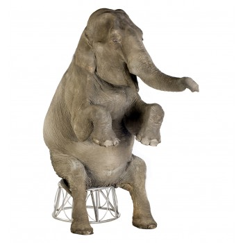 Asian Elephant Cardboard Cutout - $39.95