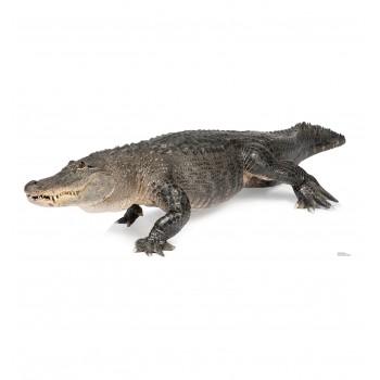 American Alligator Cardboard Cutout