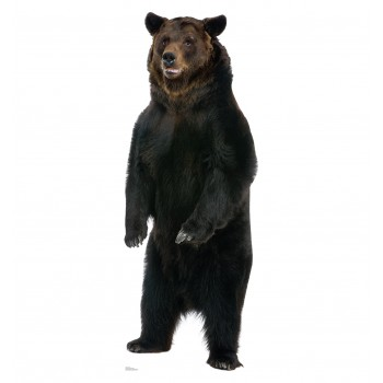 Brown Bear Cardboard Cutout