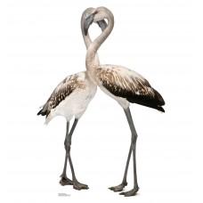 Flamingos Love Birds