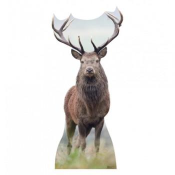 Deer Cardboard Cutout - $39.95