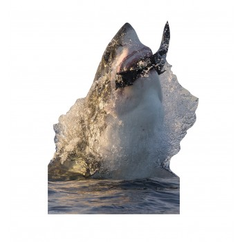 Great White Shark Cardboard Cutout