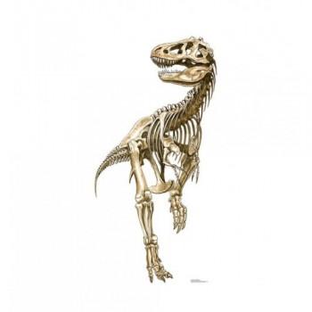 Tyrannosaurus Rex Skeleton Cardboard Cutout - $39.95