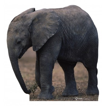 Baby Elephant -TALKING Cardboard Cutout