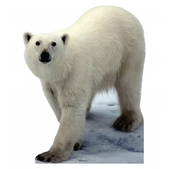 Polar Bear Cardboard Cutout