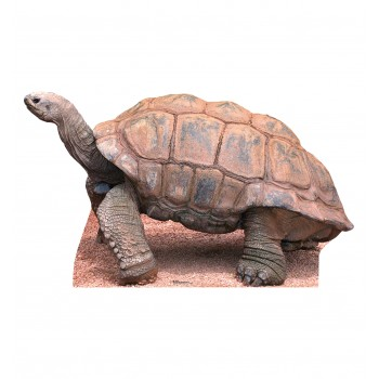 Tortoise Cardboard Cutout - $39.95