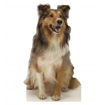 Collie Dog Cardboard Cutout - $39.95