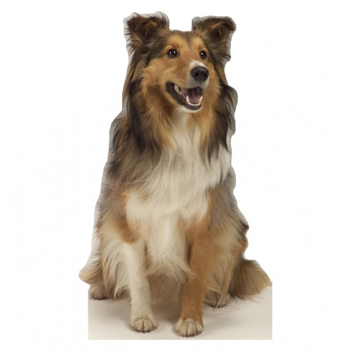Collie Dog Cardboard Cutout