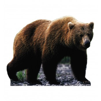 Grizzly Bear Cardboard Cutout