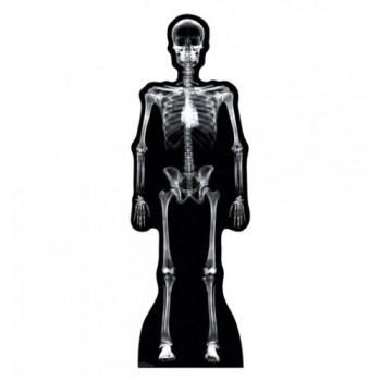 XRay Skeleton Cardboard Cutout - $39.95