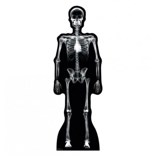 XRay Skeleton Cardboard Cutout