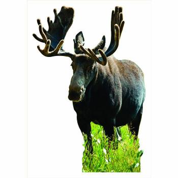 Canadian Moose Cardboard Cutout - $0.00