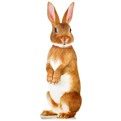Cute Rabbit Cardboard Cutout