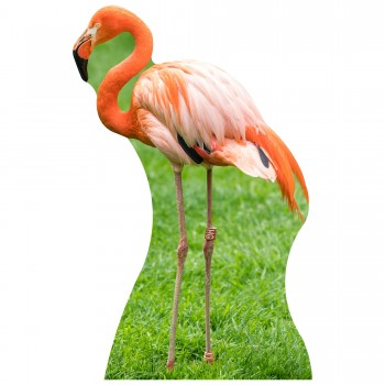 Flamingo Cardboard Cutout