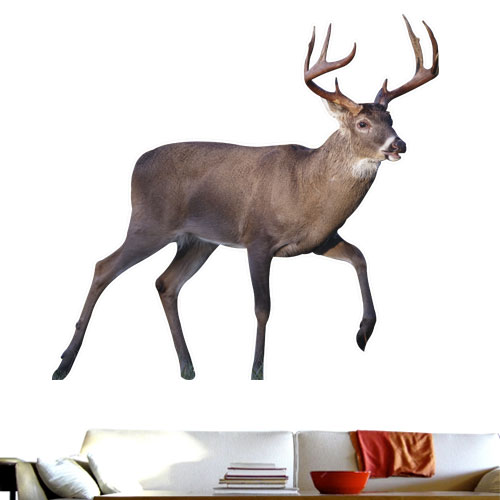 White Tail Deer Wall Decal