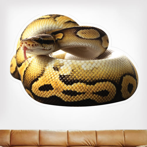 Ball Python Wall Decal