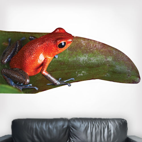Strawberry Poison Dart Frog Wall Decal