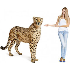 Animal Theme Cutouts - $39.95